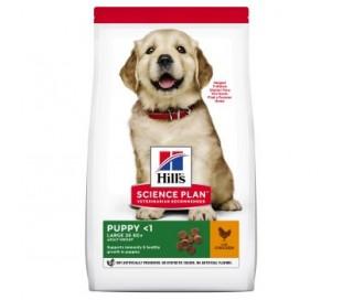 """הילס לכלב גור מגזע גדול 14.5 ק""""ג"""