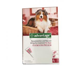 advantage לכלב בינוני / גדול